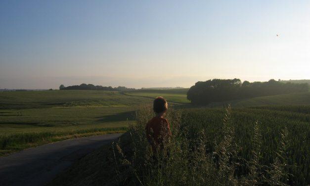 En sommeraften i Hansted skov