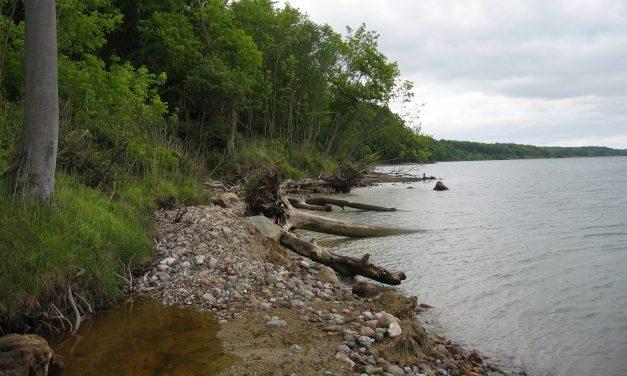 Skov, strand og vilde orkidéer