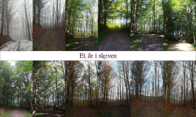 Vandrerens fire årstider i skoven