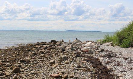 Vandreture på Endelave i sommeren 2019 – Kaninoen, Flasken og Mini-Kaninoen