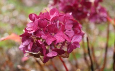 Blomsterne