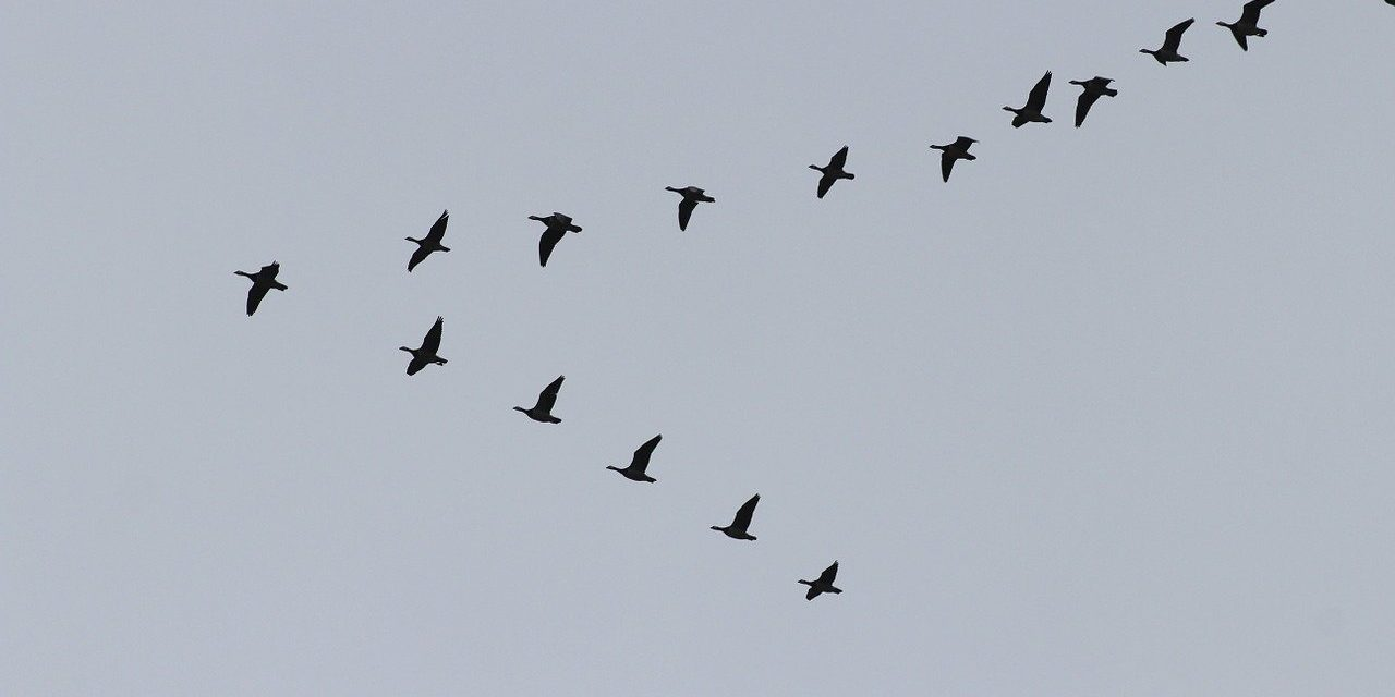 Fugleperspektiv