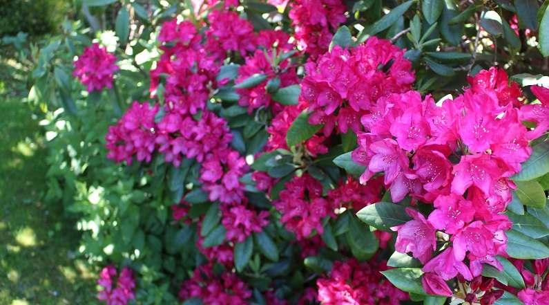 Planlæg kunderejser - Rhododendron